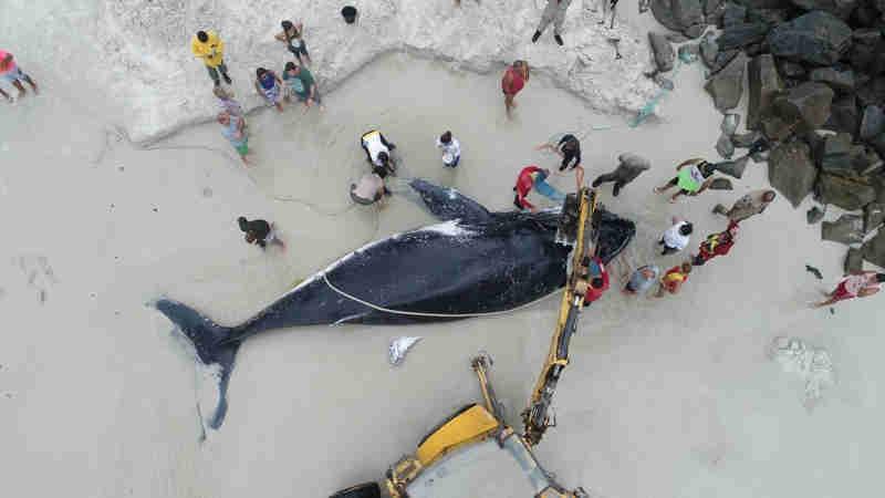 Imagens de drone mostram baleia sendo resgata em Arraial do Cabo (Foto: Marcelo de Lima/Arquivo Pessoal)
