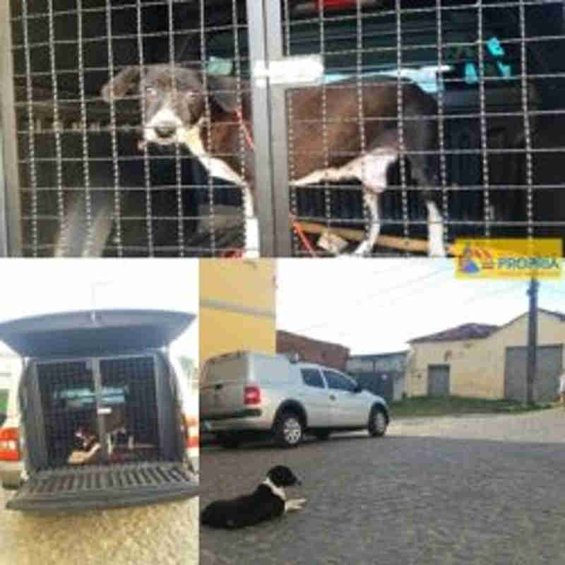 Centro de Zoonoses de Propriá (SE) apreende cachorro com câncer após denúncia