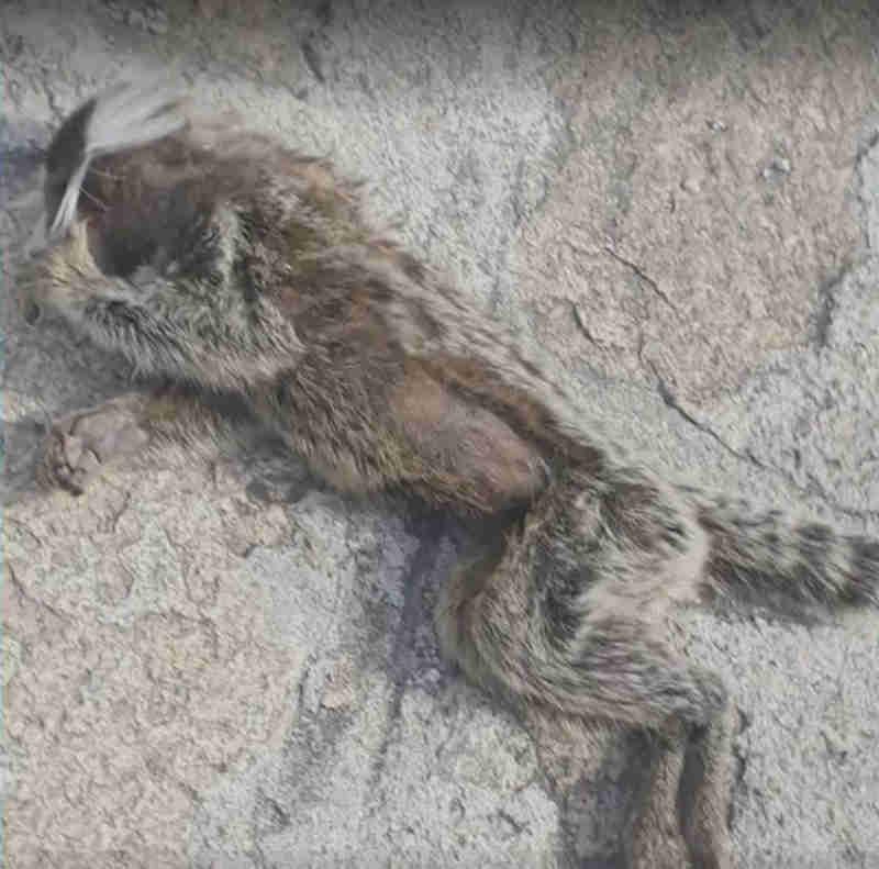 Animal morto encontrado no condomínio (Foto: Reprodução/TV Sergipe)