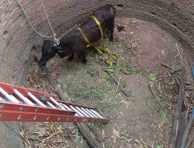 Animal foi resgatado pelos bombeiros cerca de uma hora após queda (Foto: Corpo de Bombeiros/Divulgação)