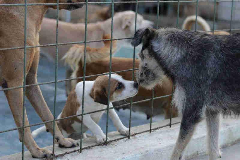 Quase 800 animais são atendidos pela instituição, um número que aumenta todos os dias (FOTO: Divulgação/Abrigo São Lázaro)