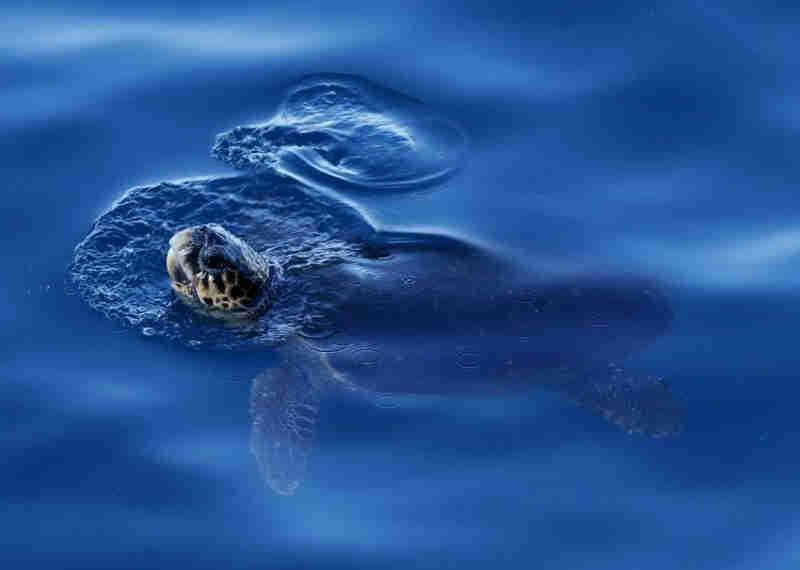 El Salvador registra novas mortes de tartarugas marinhas em sua costa