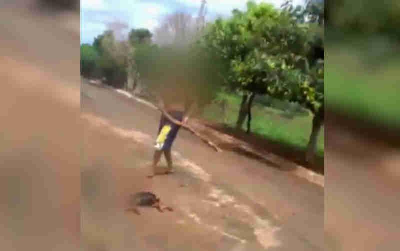 Homem mata cachorro a pauladas em rua de Palminópolis (Foto: Reprodução/TV Anhanguera)