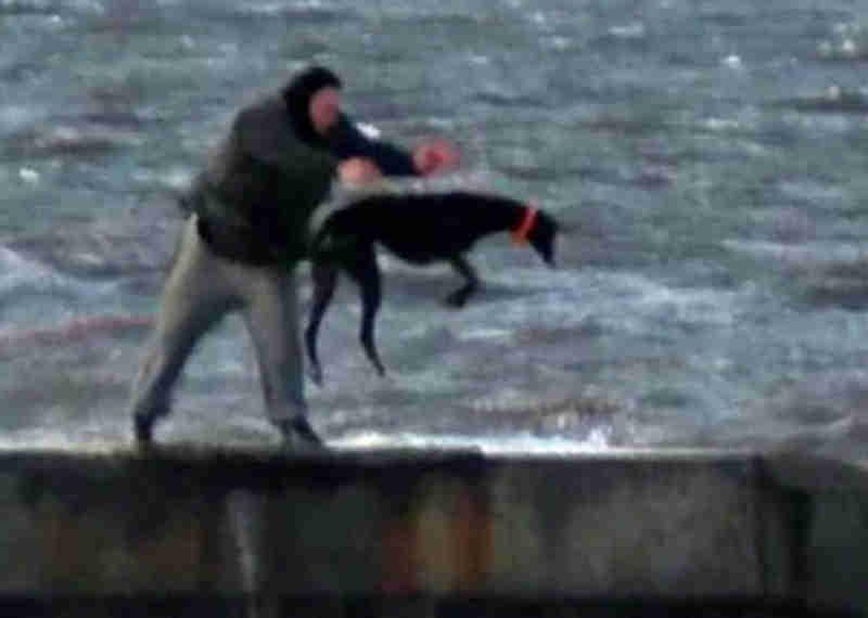 Homens atiram cães para mar gelado (Fotos: Ross Parry)