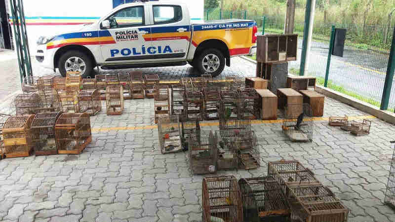 Polícia apreende 72 pássaros da fauna silvestre em Juiz de Fora. (Foto: Polícia Militar do Meio Ambiente)