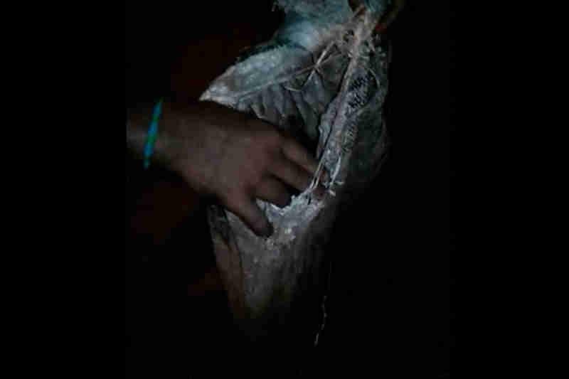 Vídeo de cachorro encontrado preso dentro de saco em matagal causa revolta em Patos de Minas, MG