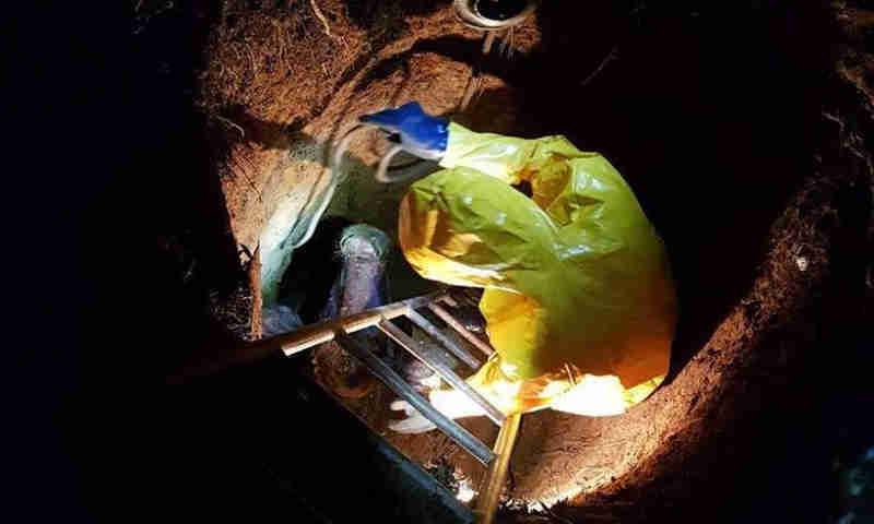 Animal precisou ser amarrado para depois ser puxado de dentro do buraco (Foto: Corpo de Bombeiros/Divulgação)