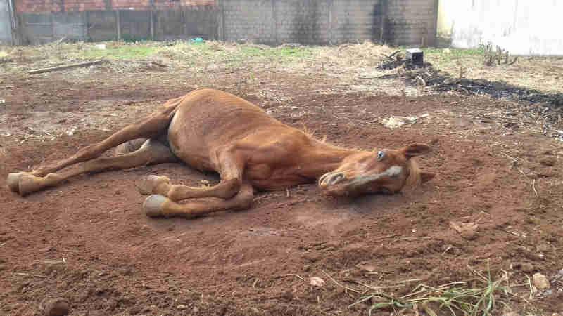 Animal estava abandonado em lote vago em Uberlândia (Foto: Polícia Militar/Divulgação)