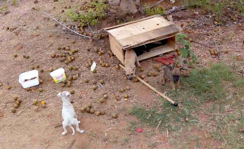 Cinco filhotes foram abandonados. Dois já conseguiram um lar. (Foto: Arquivo pessoal)