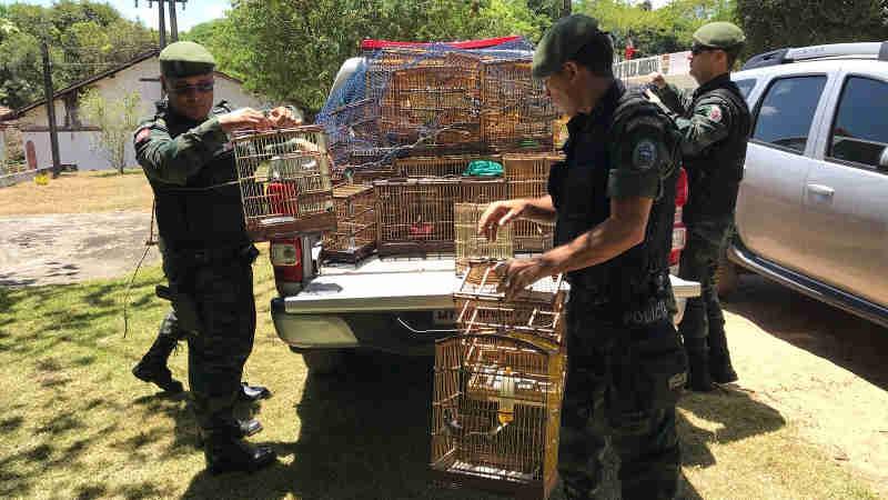 Mais de 160 aves foram apreendidas em Guarabira, PB, e seis pessoas presas (Foto: Walter Paparazzo/G1)