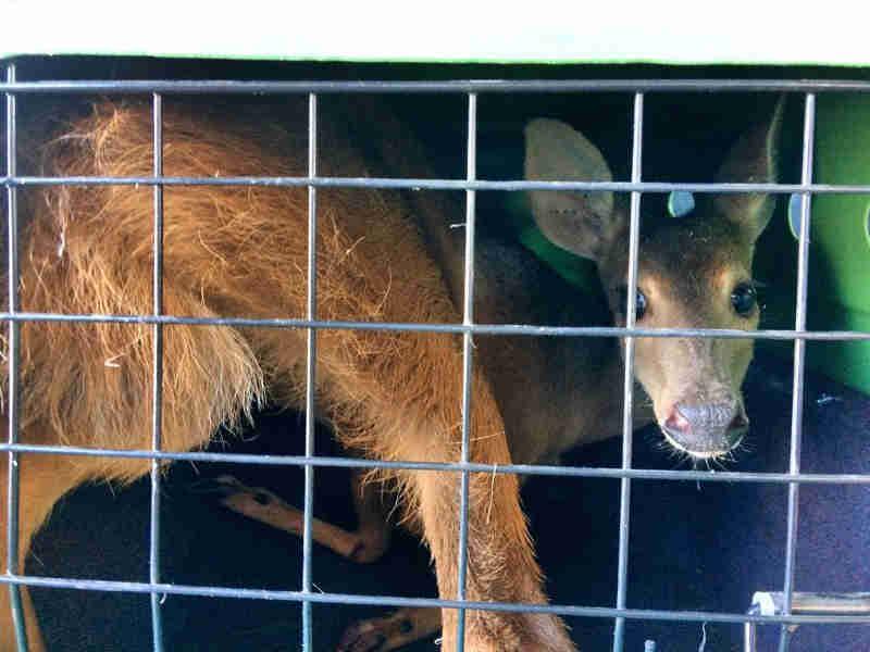O animal foi resgatado pela Secretaria Municipal do Meio Ambiente (Foto: Divulgação / Secretaria de MeioAmbiente de Fazenda Rio Grande)