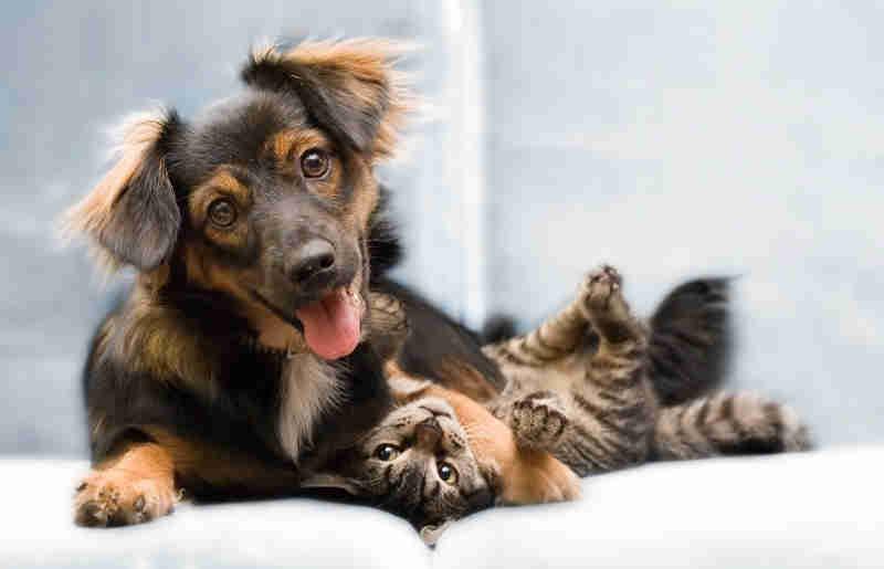 Feira de adoções da Prefeitura de Maringá terá cães e gatos, todos vacinados e castrados (Foto: Prefeitura de Maringá)