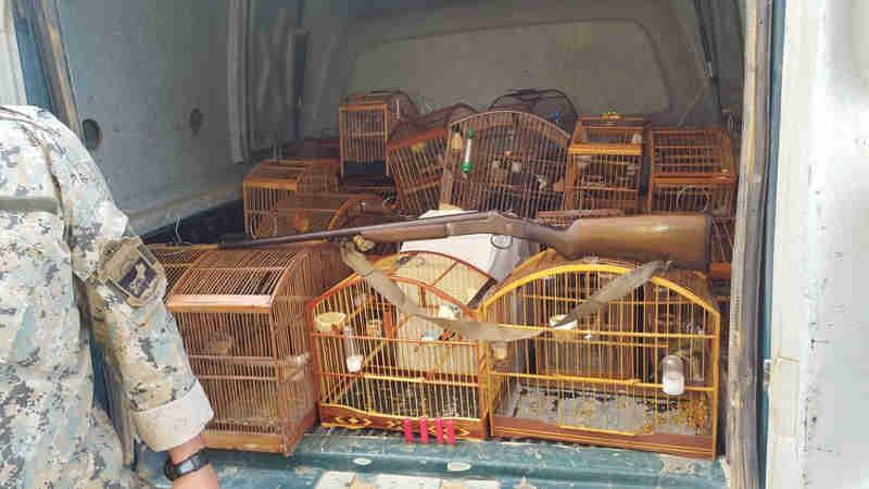 Vinte pássaros silvestres foram apreendidos em Macaé nesta quinta-feira (2) (Foto: Divulgação/3ª Upam)