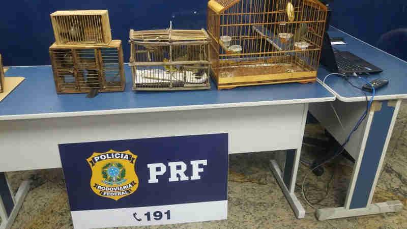 Policiais prendem suspeitos por transporte ilegal de aves. (Foto: Divulgação/ PRF)