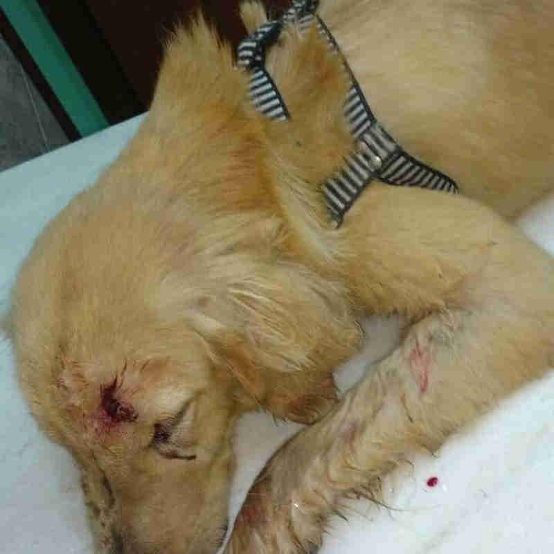 Animal sofreu hemorragia nasal e edema na face (Foto: Reprodução/Redes Sociais)