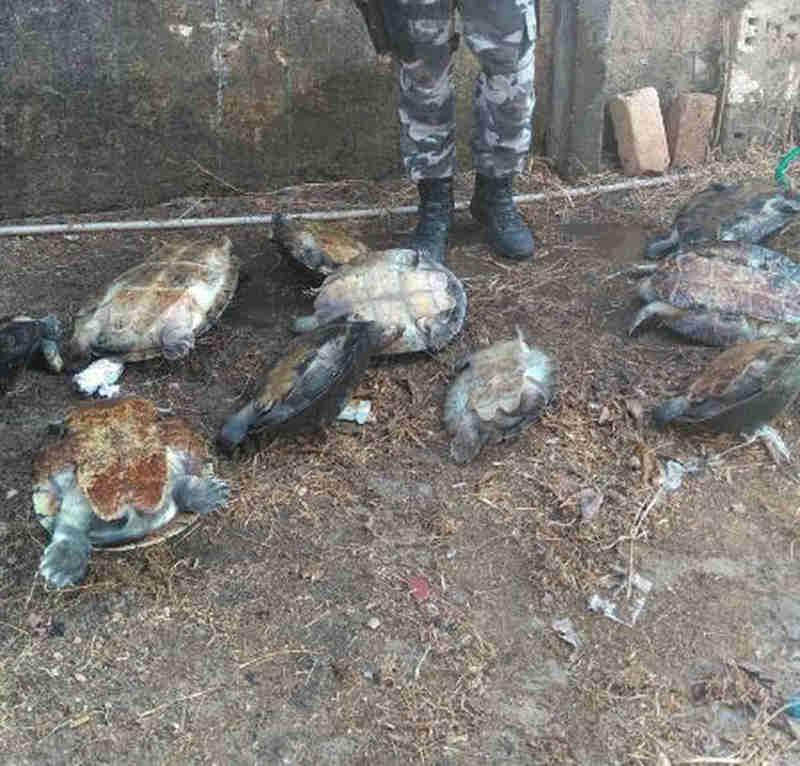 Quelônios foram apreendidos em Caracaraí, região Sul de Roraima (Foto: Polícia Militar/Divulgação)