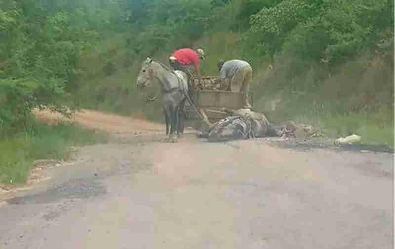 Cavalo que carregava pedras desmaia e é agredido por carroceiros no RS