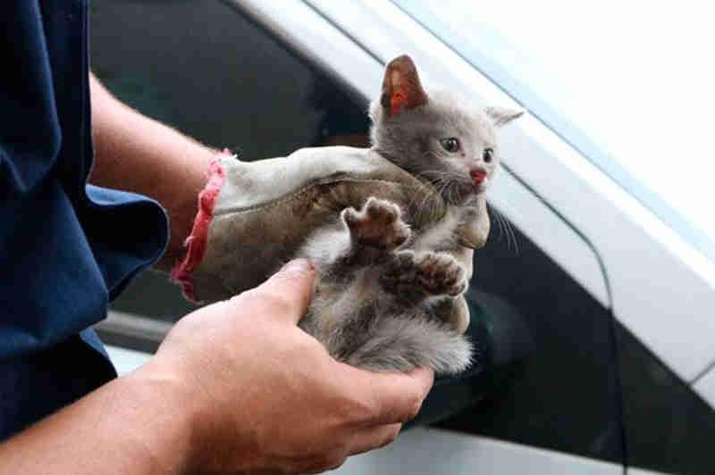 Filhote foi resgatado por volta das 11h40 sem nenhum ferimento (Fotos: Bruno Pedry)