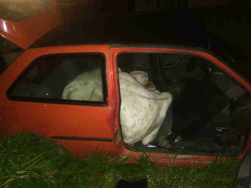 Animal foi retirado de dentro de carro após ter sido furtado em SC (Foto: Divulgação/Polícia Militar)