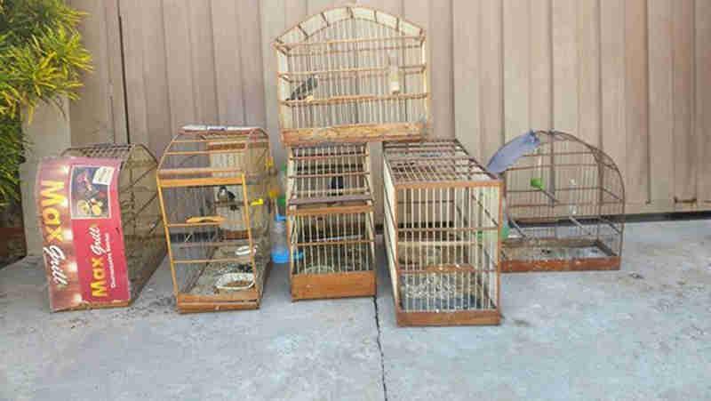 Aves foram apreendidas e passaram por atendimento (Foto: Divulgação / Polícia Ambiental)