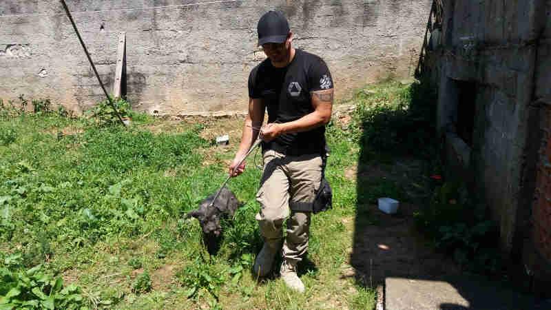 Na imagem, a cachorra sendo resgatada, caminhando (Foto: Defesa Civil)