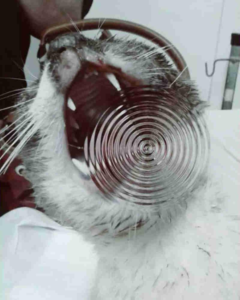 Dois gatos são mortos em armadilhas, em Barra Bonita, SP