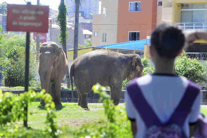 Contrários ao zoo dizem que visitação prejudica animais (Foto: EMÍDIO MARQUES)