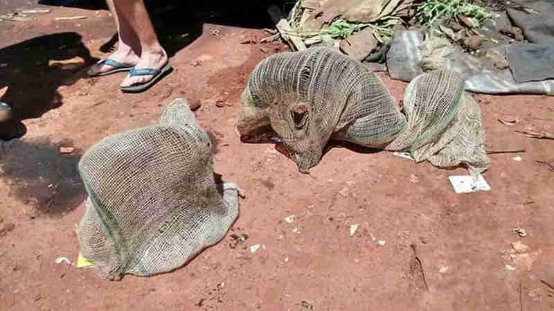 Cães foram encontrados amarrados dentro de saco de batata e jogados em caçamba em estrada de Itatinga (Foto: Arquivo Pessoal)