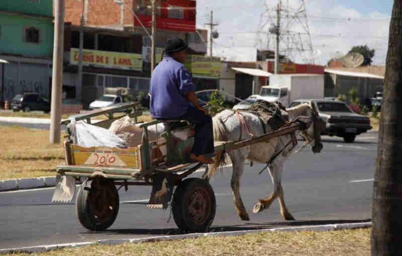 Projeto que proíbe carroças puxadas por animais em Osasco (SP) está prestes a ser votado