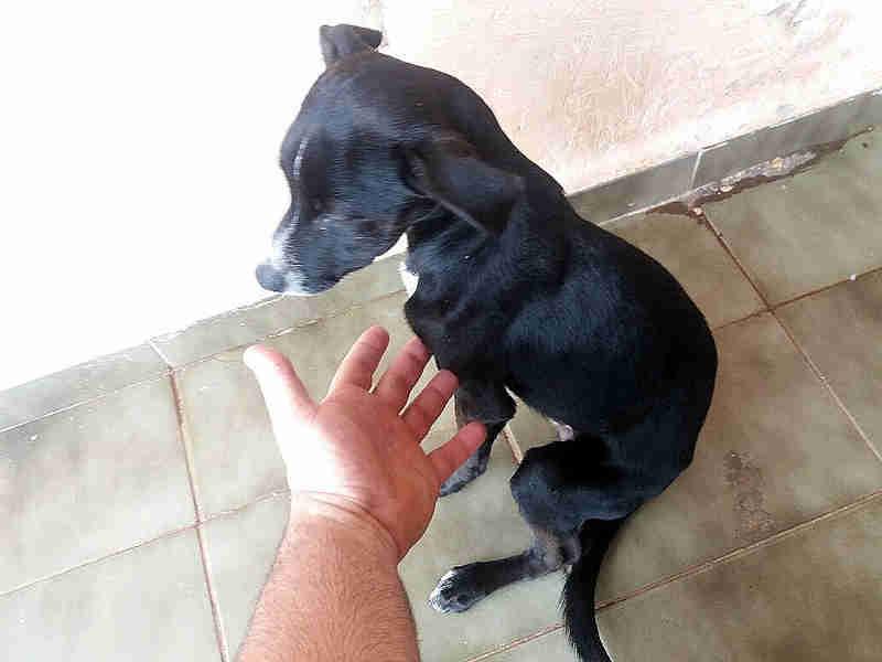 Cão encontrado pela polícia no imóvel na Vila São Pedro (Foto: Polícia Ambiental/Divulgação)