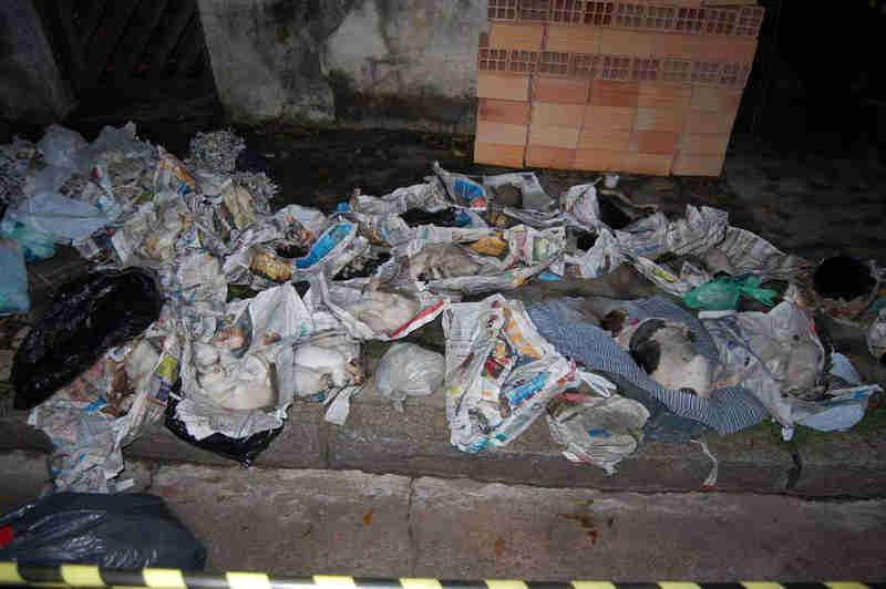 Animais encontratos mortos na casa de Dalva Lina da Silva, em 2012 (Foto: HÉLIO TORCHI)