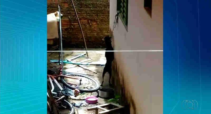Cadela foi vista pendurada por coleira (Foto: Divulgação/TV Anhanguera)
