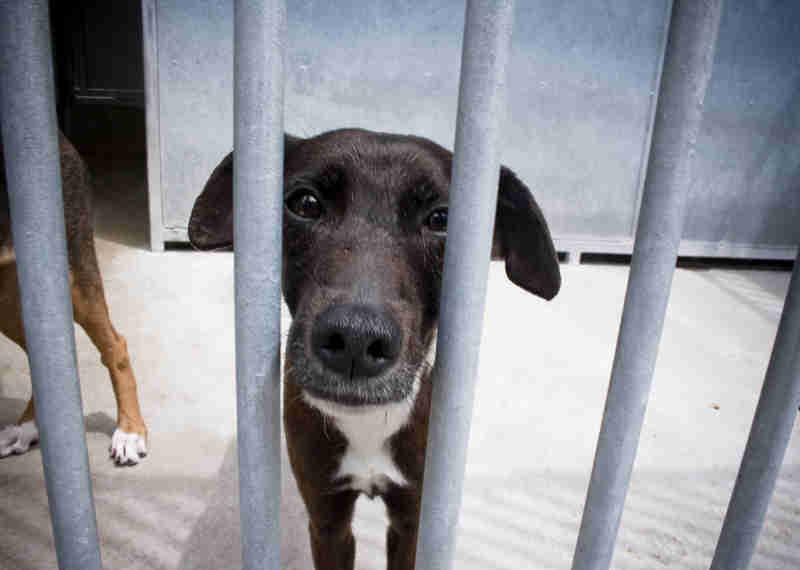 Portugal: Lei dos maus tratos a animais continua a ser 'disfuncional'