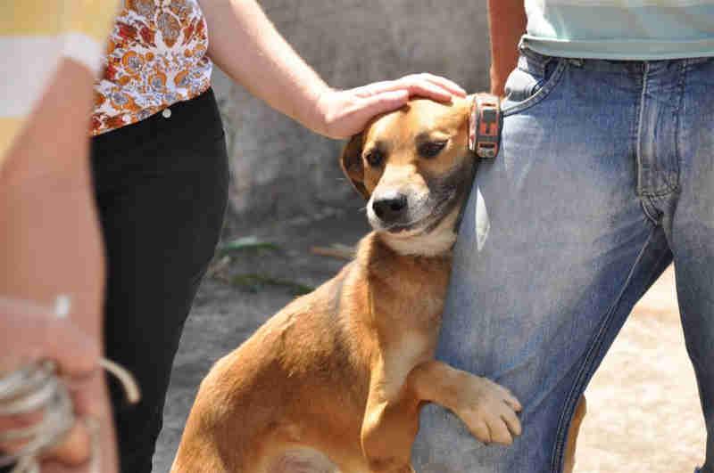 Animais domésticos e silvestres vão ter mais proteção com lei (Foto: Divulgação)