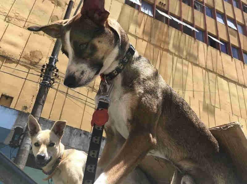 Grupo faz vaquinha para ajudar moradora de rua doente que se recusa ficar longe dos cães
