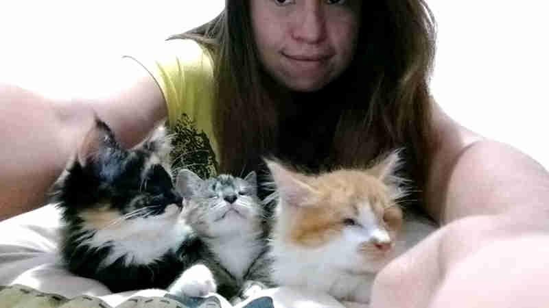 Ativista adota ninhada de gatos que teve os olhos perfurados