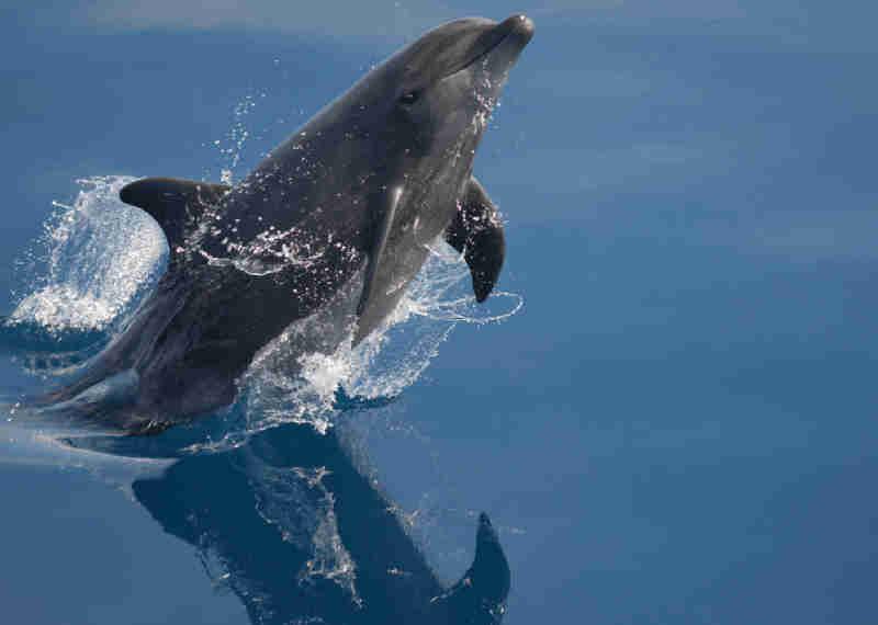 O Vancouver Aquarium finalmente se rende aos ativistas e encerra o cativeiro de baleias e golfinhos!