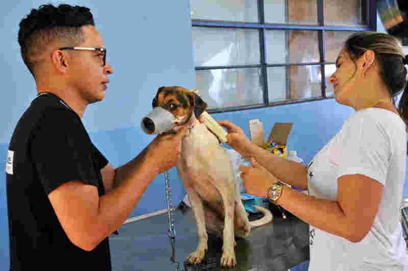 Valente ganhou uma família depois de dois meses de espera - Foto: Valdenir Rezende/Correio do Estado