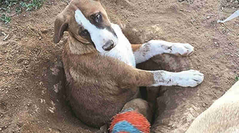 EUA: Cão fica preso em buraco que escavou