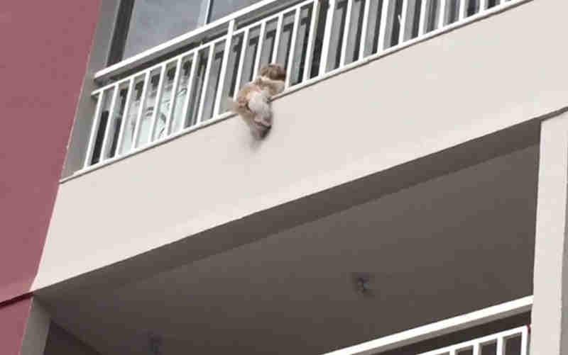 Cadela cai da sacada de prédio em Goiânia (Foto: Arquivo pessoal)