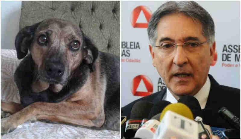 Governador de MG veta PL que proíbe uso de animais em testes de produtos cosméticos
