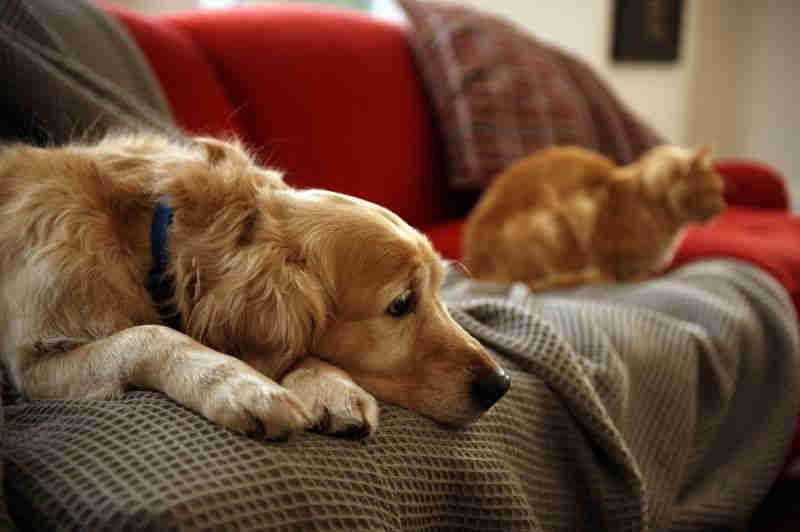Portugal: Câmara da Trofa oferece incentivos à adoção de cães e gatos