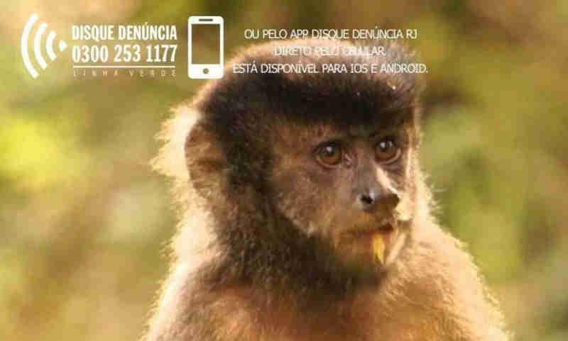 Cartaz do Disque-Denúncia contra morte de macacos (Foto: Reprodução)