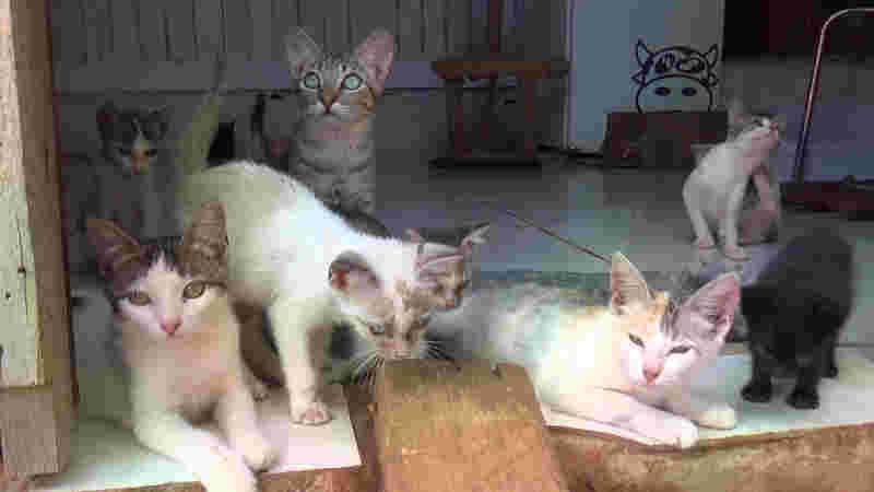Atualmente existem 13 gatos para adoção em Jaru (Foto: Rede Amazônica/Reprodução)