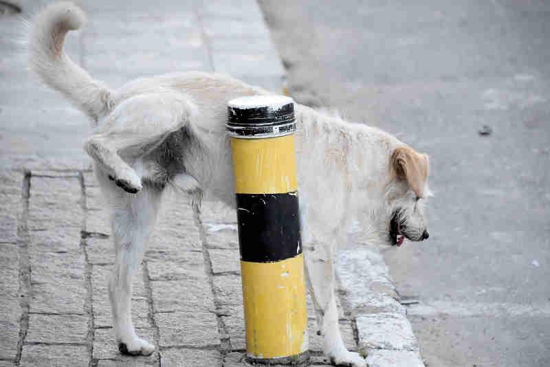 Vereadora quer lei para cachorro comunitário em Itajaí, SC