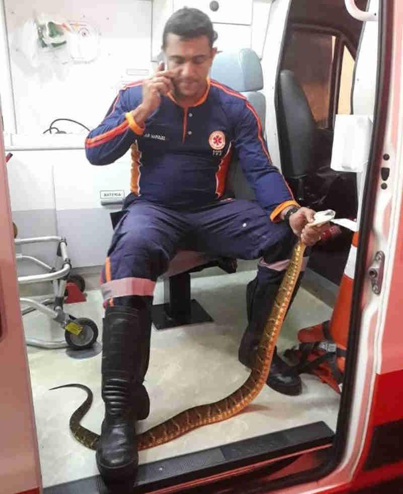 Serpente estava próximo à calçada em bairro de Cruzeiro do Sul (Fotos: Elvisson Jair/Arquivo pessoal )