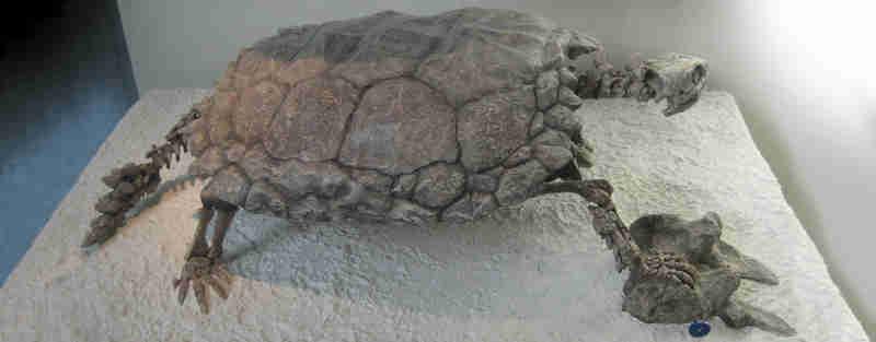Pesquisadores reproduzem em 3D cérebro da mais antiga tartaruga encontrada na Alemanha