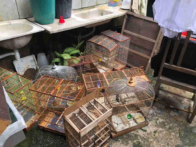 Gaiolas com aves silvestres foram encontradas dentro de uma loja em Maceió (Foto: Coronel Ascânio/Arquivo pessoal)