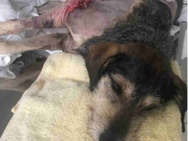 Homem é acusado de atirar contra três cachorros na parte alta de Maceió, AL