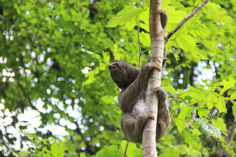 Alagoas aumenta número de resgates e reduz óbitos de animais silvestres